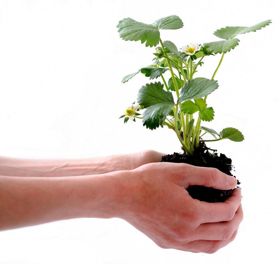 holdingplant