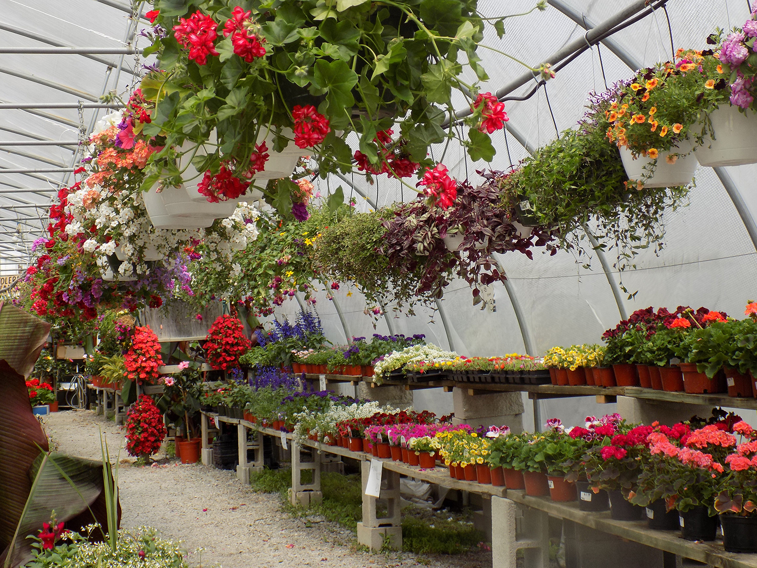 plants and flowers for sale in crown point indiana
